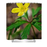 Yellow Wood Anemone Shower Curtain