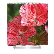 Zonal Geranium Named Mosaic Red Shower Curtain