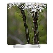 Beargrass  -  60603-32 Shower Curtain