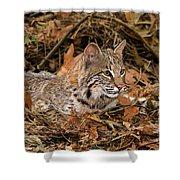 611000006 Bobcat Felis Rufus Wildlife Rescue Shower Curtain