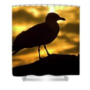 Nature And Travel Images Shower Curtain