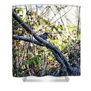 641 Cf Two Branches Shower Curtain