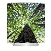642 Pr A Stand  Of Trees Shower Curtain