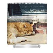 #665 03 Catnap  Shower Curtain