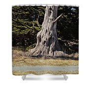 668 Det The Old Tree Shower Curtain