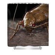 Bedbug Cimex Lectularius Shower Curtain