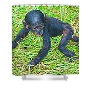 Bonobo Baby Shower Curtain