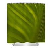 Calla Lily Stem Close Up Shower Curtain
