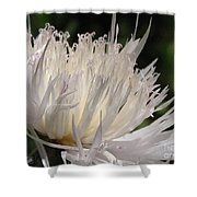 Centaurea Named The Bride Shower Curtain