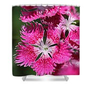 Dianthus Cross Shower Curtain