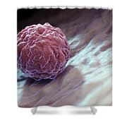 Embryonic Stem Cell Shower Curtain