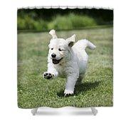 Golden Retriever Puppy Shower Curtain by John Daniels