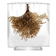 Hanging Dried Flowers Bunch Shower Curtain