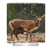 Mesopotamian Fallow Deer  Shower Curtain