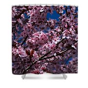 Plum Tree Flowers Shower Curtain
