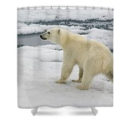 Polar Bear Crossing Ice Floe Shower Curtain