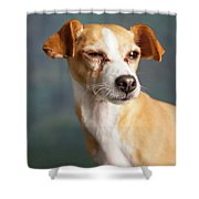 Portrait Of A Chihauhua Mix Dog Shower Curtain