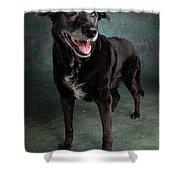 Portrait Of A Labrador Golden Mixed Dog Shower Curtain