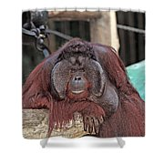 Portrait Of A Large Male Orangutan Shower Curtain