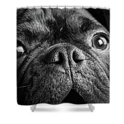 Portrait Of Pug Bulldog Mix Dog Shower Curtain