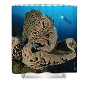 The Salvador Dali Sponge With Intricate Shower Curtain
