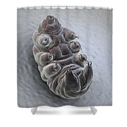 Water Bear Tardigrades Shower Curtain