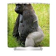 Western Lowland Gorilla Shower Curtain