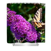 Yellow Tiger Swallowtail Papilio Glaucus Butterfly  Shower Curtain