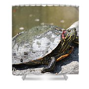 75 Year Old Turtle Moving On Shower Curtain