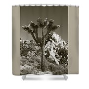 Joshua Tree National Park Landscape No 7 In Sepia Shower Curtain