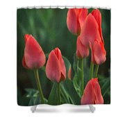 7reds Shower Curtain