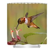 Allens Hummingbird Shower Curtain