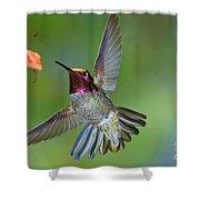 Annas Hummingbird Shower Curtain