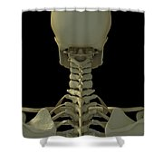 Bones Of The Head And Neck Shower Curtain