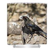 Bronzed Cowbird Shower Curtain
