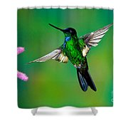 Buff-winged Starfrontlet Shower Curtain