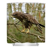 Buse Variable Buteo Buteo Shower Curtain