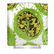 Cancer Cells Tem Shower Curtain