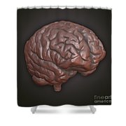 Clay Model Of Brain Shower Curtain