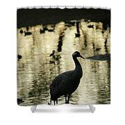 Common Cranes At Gallocanta Lagoon Shower Curtain