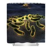 Escherichia Coli Bacteria Shower Curtain