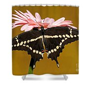 Giant Swallowtail Butterfly Shower Curtain