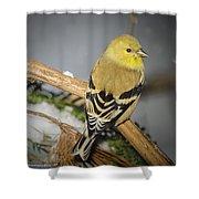 Golden Finch Shower Curtain