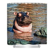 Hippopotamus In River. Serengeti. Tanzania Shower Curtain