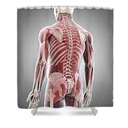 Human Muscles Shower Curtain