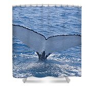 Humpback Whales Shower Curtain