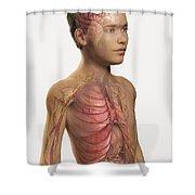 Internal Anatomy Pre-adolescent Shower Curtain