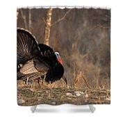 Male Eastern Wild Turkey Shower Curtain