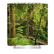 Path In Temperate Rainforest Shower Curtain by Elena Elisseeva