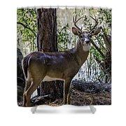 8 Point Buck In My Backyard Shower Curtain